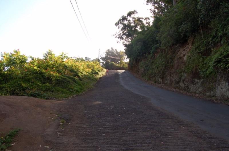 muliwai_trail2